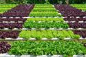 Organic Farming and Ecosystems
